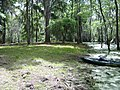 Caddo Lake - Goat Island camp site - panoramio.jpg