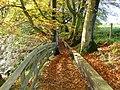 Calderglen Country Park, East Kilbride - geograph.org.uk - 1107213.jpg