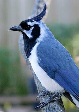 Yucatan Bird Guide List and Photos: Birding at Hacienda ...