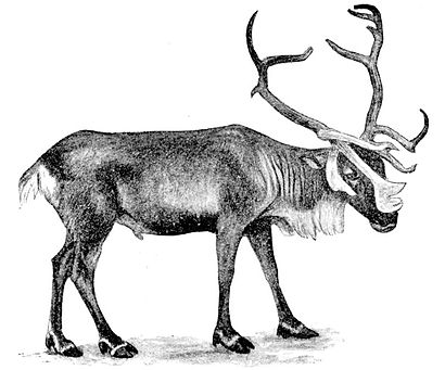 Cambridge Natural History Mammalia Fig 157.jpg
