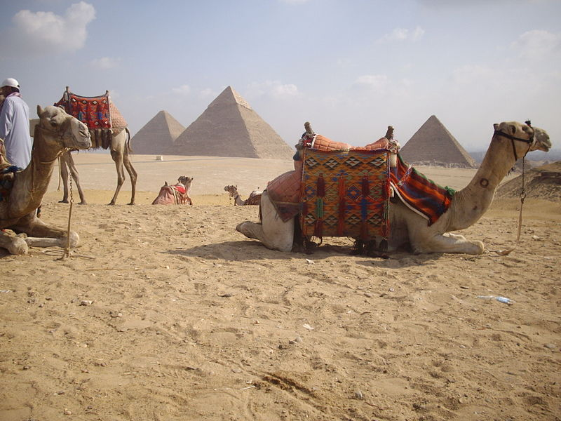 File:Camels and the Pyramids co-existing for centuries..JPG