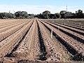 Camp al delta del Llobregat - 20200830 181300.jpg