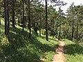 Campdevànol, Province of Girona, Spain - panoramio (2).jpg