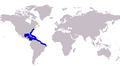 Carangoides bartholomaei distribution.png
