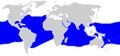 Carcharhinus longimanus distmap.png