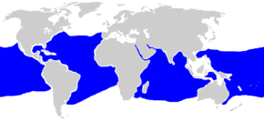 Description de l'image  Carcharhinus longimanus distmap.png.