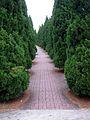 Cedar Tree Walkway (2882458410).jpg