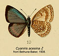 CelsastrinaAcesinaBethBak1908.JPG