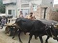 Chak 72 GB, Pakistan - panoramio (1).jpg