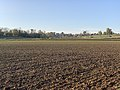 Champ Fasses - Saint-Cyr-sur-Menthon (FR01) - 2020-10-31 - 4.jpg
