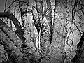 Cheeky Palm Tree Torquay (10618334104).jpg