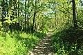 Chemin de Lunezy à Ballainvilliers entre les communes de Villejust et Saulx-les-Chartreux le 4 mai 2016 - 07.jpg