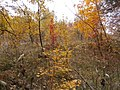 Cherkas'kyi district, Cherkas'ka oblast, Ukraine - panoramio (343).jpg