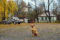 Chernobyl (38365891522).jpg