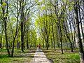 Chertanovo Severnoye District, Moscow, Russia - panoramio (4).jpg