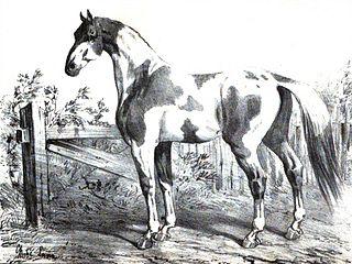 ملفcheval De Dongolahjpg ويكيبيديا