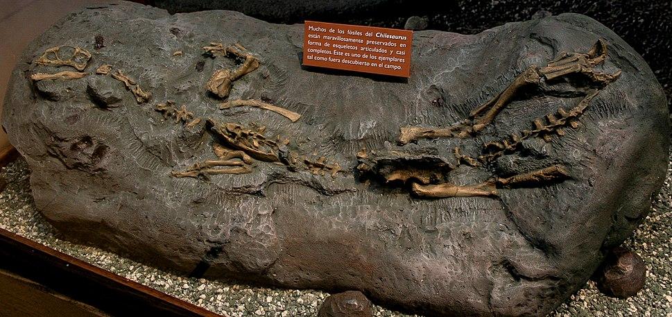 Chilesaurus holotype cast