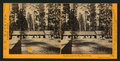 Clark's, near the Big Tree Grove, Mariposa County, Cal, by Watkins, Carleton E., 1829-1916.png