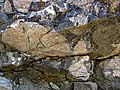 Clast-rich impact pseudotachylite (Sudbury Breccia, Paleoproterozoic, 1.85 Ga; Crab Lake South roadcut, south-southeast of Cartier, Ontario, Canada) 5 (47735057571).jpg