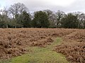 Clearing in the woods, Sloden, New Forest - geograph.org.uk - 336123.jpg
