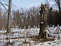 Cmentarz wojskowy z I wojny światowej na wzgórzu Pustki (Łużna) 17.JPG
