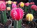 Color cactus.jpg
