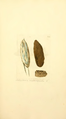 Coloured Figures of English Fungi or Mushrooms - t. 179.png
