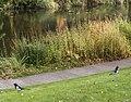 Copenhagen Oct 15 (125618639).jpeg