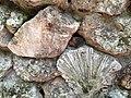 Coral types making rock wall - panoramio.jpg