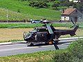 Cougar Swiss milouf 3.jpg