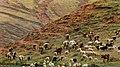 Cow - panoramio (1).jpg