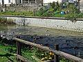 Crespino - Lamone river 2.JPG
