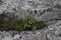 Crevice (14015354418).jpg