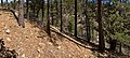 Crooks Canyon - Flickr - aspidoscelis.jpg