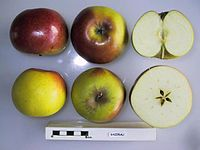 Cross section of Gazerau, National Fruit Collection (acc. 1947-216).jpg