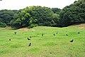 Crow farm XD - panoramio.jpg