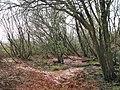Crymlyn Bog - geograph.org.uk - 561327.jpg