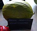 """Cucumis melo, """"melón mochuelo"""", Villaconejos.jpg"""