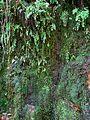 Culantrillos en Fuente Agria (Pórtugos).jpg
