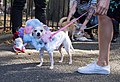 Cupcake and cotton candy dog unenthusiastic (10472).jpg