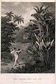 Cupid inspiring plants with Love, in a tropical landscape. E Wellcome V0043104.jpg