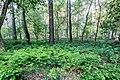Dülmen, Naturschutzgebiet -Am Enteborn- -- 2014 -- 0191.jpg