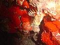 DSC00186 - recifes de coral - Naufrágio e recifes de coral no Nilo.jpg