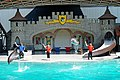 DSC09278 - Dolphin Show (37080415831).jpg