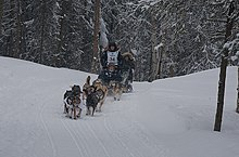 Dallas Seavey 2012 Iditarod Champion.jpg