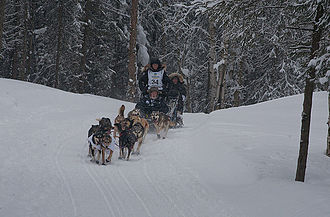 Dallas Seavey - Dallas Seavey and his dog team mushing through Anchorage, Alaska during the ceremonial start of the 2012 Iditarod Trail Sled Dog Race
