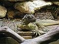 Dallas Zoo Reptile.jpg
