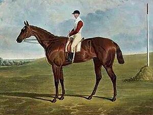 Dangerous (horse) - Image: Dangerous, Derby winner
