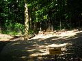 Daniel w raciborskim mini-zoo.jpg