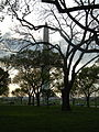 Dark Trees and the Washington Monument.JPG